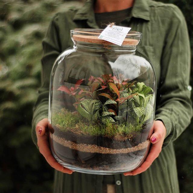 Magiczny świat roślin : Las w słoiku. Dlaczego tak bardzo go nie ...
